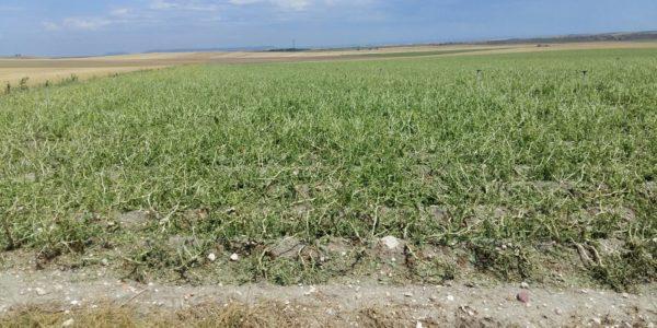 Constituido un grupo de trabajo para mejorar la contratación y cobertura de los seguros agrarios en Castilla y León