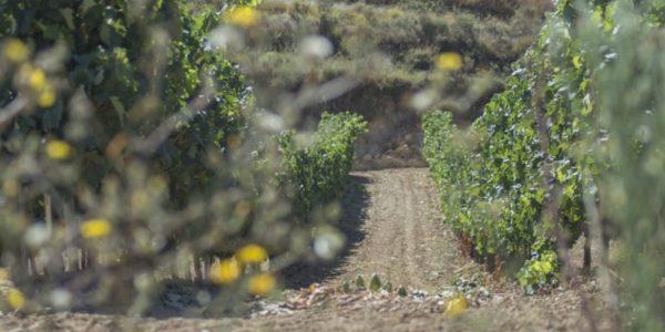 ASAJA Rioja censura el incremento de hasta el 18% en el precio del seguro de uva de vinificación