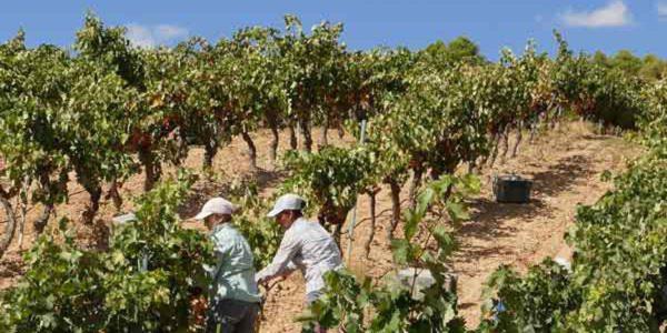 Andalucía elabora el Estatuto de las Mujeres Rurales y del Mar