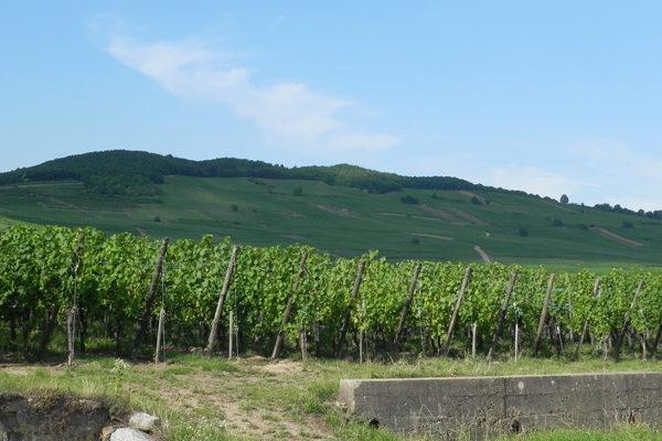 OIVE reclama un mayor presupuesto en el apoyo al sector vitivinícola que propone el Ministerio