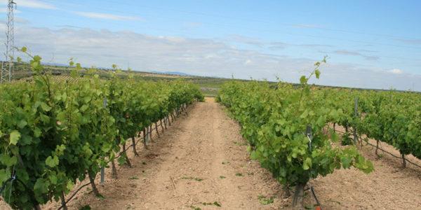 Extremadura dota con 9 millones las ayudas a la restructuración y reconversión de viñedos y Andalucía con 3 millones.