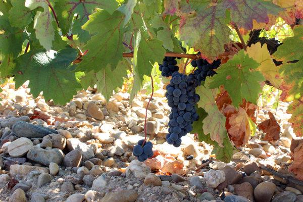 En la semana 20 el vino crece un 64,5% interanual y el aceite de oliva un 29,2%