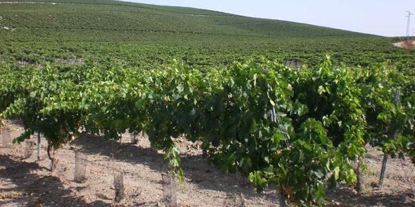 Ayudas a la suscripción de seguros agrarios por 8,1 millones de euros en Castilla-León