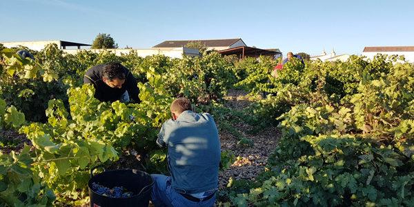 Planas presenta un nuevo RD que amplia las medidas extraordinarias en materia de empleo agrario