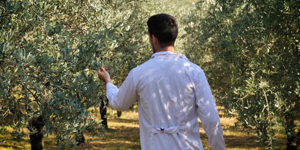 Ifapa y Cortijo el Puerto se unen para investigar cultivos ecológicos del olivar