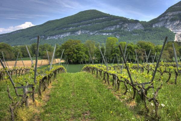 La superficie de viñedo ecológico crece un 7% y de olivar un 9,3%
