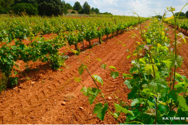 EFOW pide a los países productores que se unan para promover la continuidad de la reforma del sistema de autorizaciones para plantaciones de vino