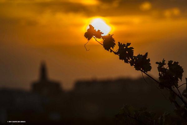 Rioja cuenta ya con un total de 189 hectáreas de viñedos singulares