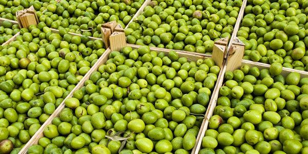 Andalucía concede 32,6 millones en ayudas a 87 industrias oleícolas y de aceituna de mesa