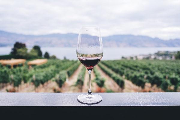 Rioja se plantea como una opción enoturística segura
