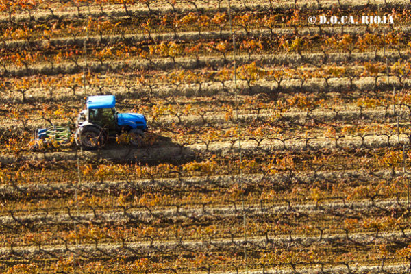 El presupuesto destinado a subvencionar las primas de seguros agrarios se incrementa en un 19% en 2020
