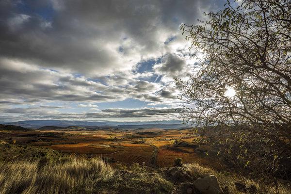 Las exportaciones en la D.O.Ca. Rioja crecen un 4% en valor en el primer semestre del año