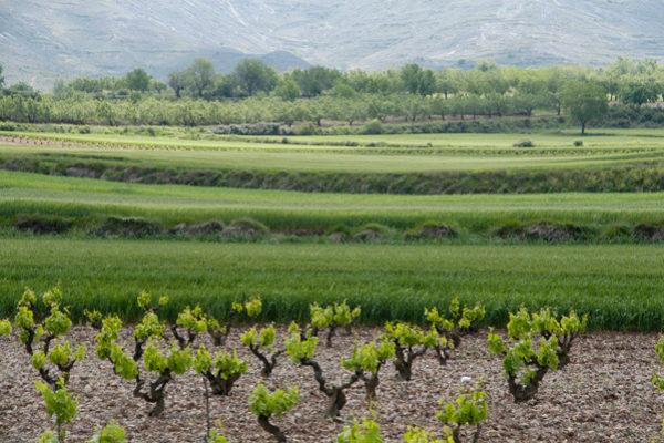 El Gobierno de La Rioja celebra el acuerdo de la nueva PAC por apoyar la sostenibilidad, rentabilidad y competitividad del campo riojano