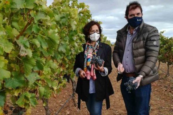 Fin de la vendimia en Navarra con un total de 74 millones de kilos de uva