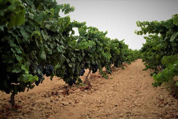 """Asaja pide a la Comisión Europea que """"pise el terruño"""" antes de legislar para los agricultores y ganaderos"""