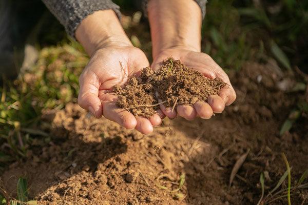 COPPEREPLACE, un proyecto internacional liderado por la PTV que reducirá el uso del cobre en viñedo