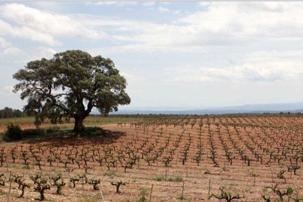 La venta de vinos de la DO Valencia roza los 45 millones de botellas en la campaña 2019/20