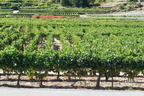 Los vinos de Rías Baixas mantienen su tendencia al alza en los mercados internacionales