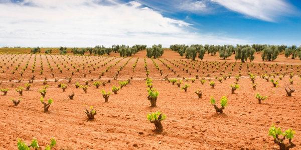 Extremadura recurrirá de nuevo las limitaciones impuestas por el Ministerio al sector al del cava extremeño