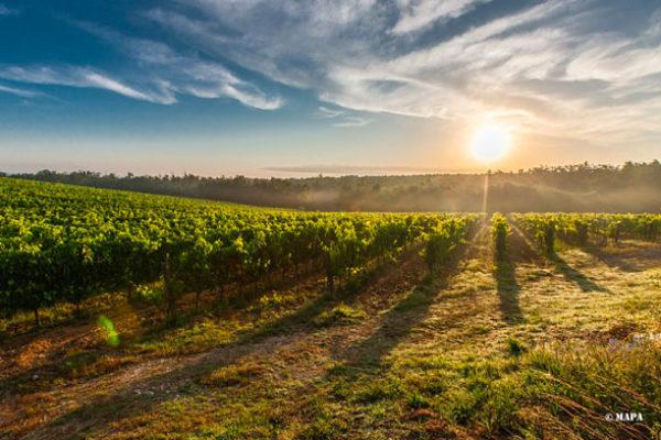 El Ministerio de Agricultura, Pesca y Alimentación analiza la situación del mercado del vino con organizaciones del sector