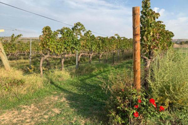 Los agricultores madrileños podrán realizar instalaciones sin calificación urbanística