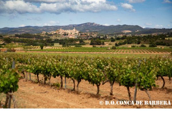La D.O. Conca de Barberá triplica en doce años su producción de vinos de trepat