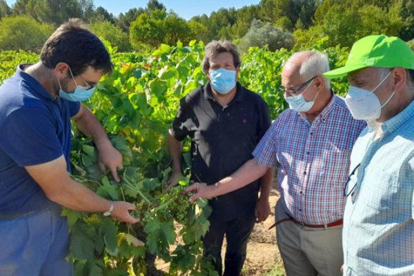 AVA-ASAJA pide al Gobierno valenciano que subvencione las trampas para combatir la polilla del racimo