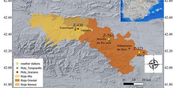 La variedad Graciano presenta más resiliencia que la Tempranillo frente al calentamiento climático en la D.O.Ca. Rioja