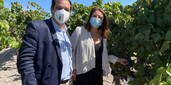 El proyecto Seawines de viticultura usa el alga asiática para reducir los fitosanitarios