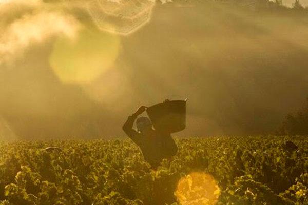 Buena evolución hacia la vendimia en la D.O.Ca Rioja