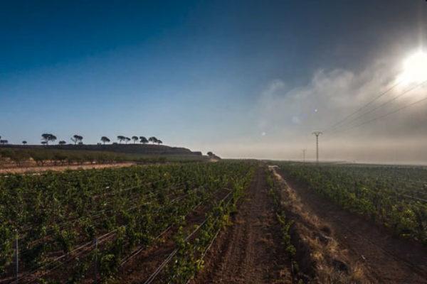 Nuevo Pliego de condiciones D.O.P. Alicante