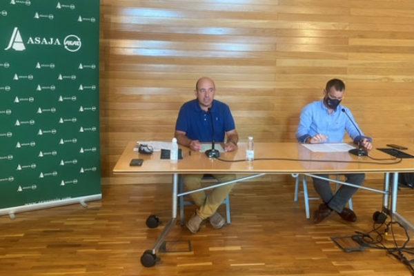 ARAG-ASAJA advierte a las bodegas de que los precios de la uva deben mejorar en en un contexto de recuperación de ventas.
