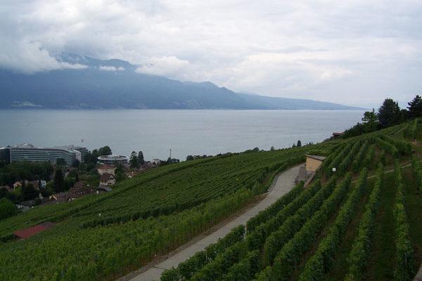 El comercio mundial de vino alcanza un récord histórico